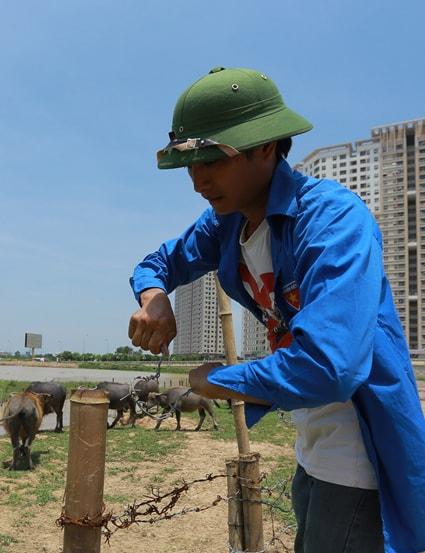 Thiện đang buộc lại hàng rào trâu trên đất dự án