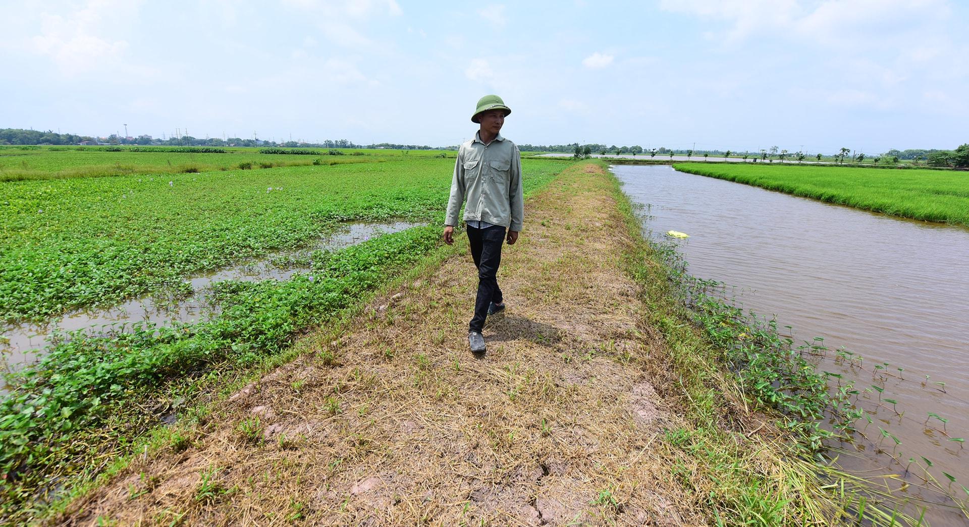 Triệu đi trên cánh đồng trũng, nơi có dự án 'khu công nghiệp' chưa bao giờ được khởi công